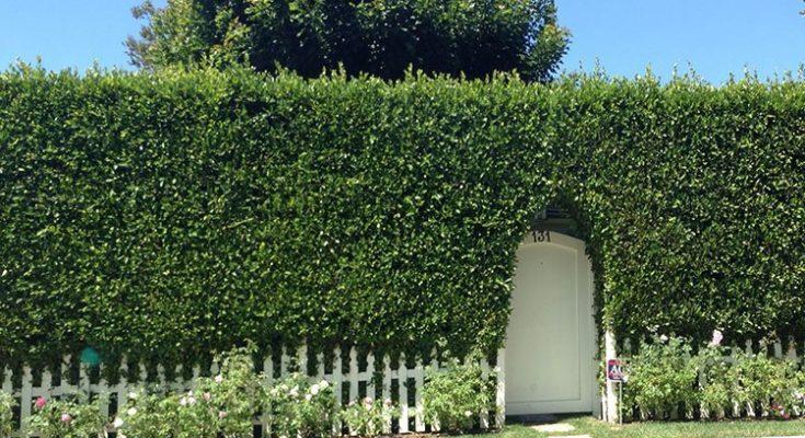hedge-025-lg