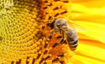 Как-завести-пчел-с-нуля