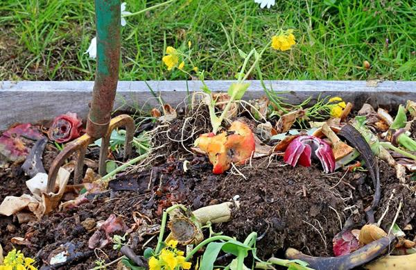 na-dache-v-kompost-mozhno-dobavlyat-gnilye-frukty