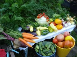 Советы по выращиванию овощей